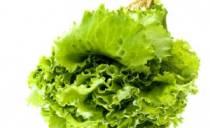 сохранить листья салата на зиму
